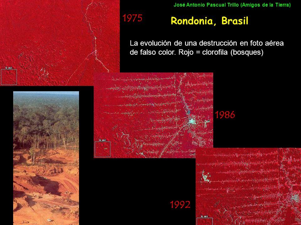 Rondonia, Brasil 1975 1986 1992 La evolución de una destrucción en foto aérea de falso color. Rojo = clorofila (bosques) José Antonio Pascual Trillo (