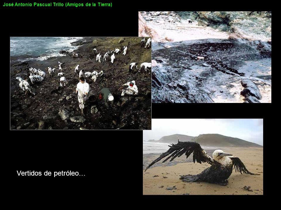 Vertidos de petróleo… José Antonio Pascual Trillo (Amigos de la Tierra)