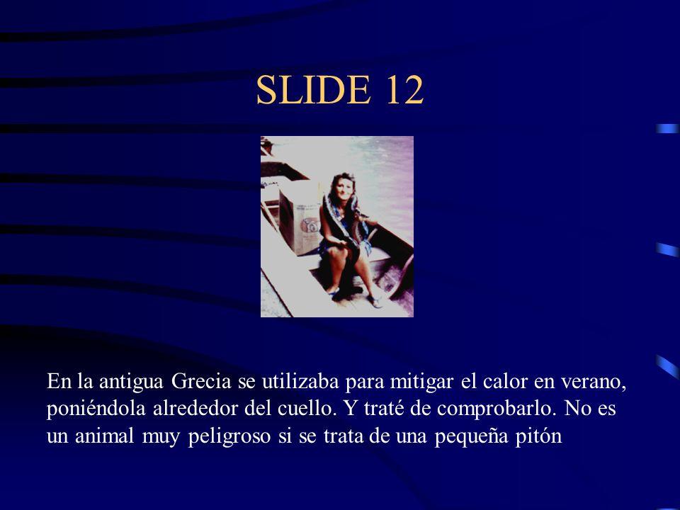 SLIDE 12 En la antigua Grecia se utilizaba para mitigar el calor en verano, poniéndola alrededor del cuello. Y traté de comprobarlo. No es un animal m
