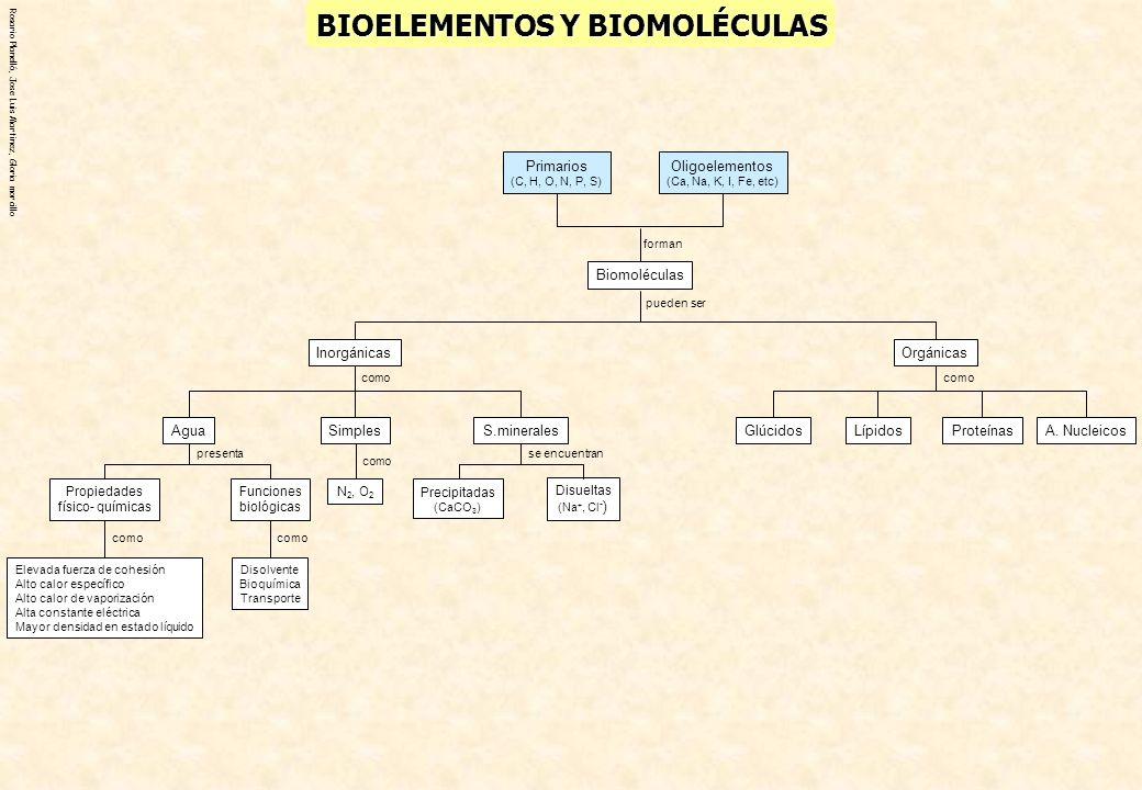 Rosario Planelló, Jose Luis Martinez, Gloria morcillo BIOELEMENTOS Y BIOMOLÉCULAS LípidosGlúcidosA. NucleicosProteínas como Orgánicas Oligoelementos (