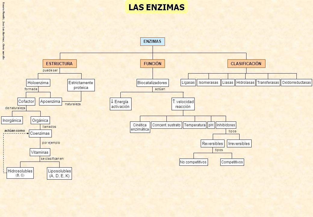 Rosario Planelló, Jose Luis Martinez, Gloria morcillo LAS ENZIMAS ENZIMAS CLASIFICACIÓN OxidorreductasasTransferasasHidrolasasLiasasIsomerasasLigasas