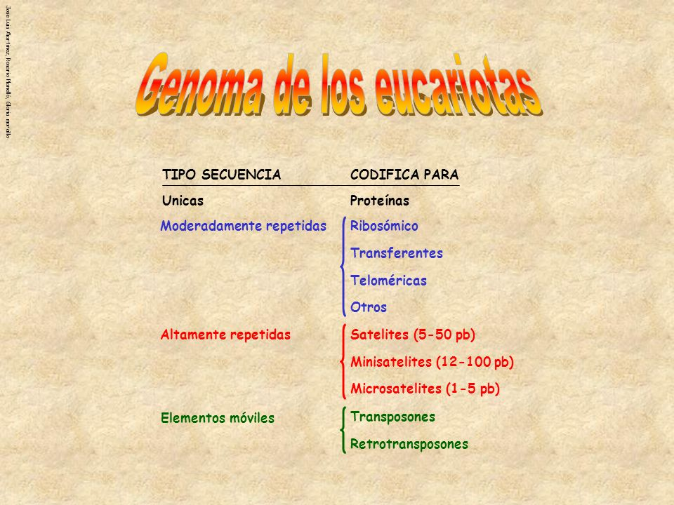 Jose Luis Martinez, Rosario Planelló, Gloria morcillo UnicasProteínas Moderadamente repetidasRibosómico Transferentes Teloméricas Otros Altamente repe
