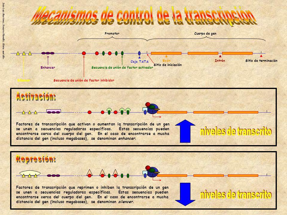 Jose Luis Martinez, Rosario Planelló, Gloria morcillo PromotorCuerpo de gen IntrónExón Sitio de terminación Sitio de iniciación Caja TATA Secuencia de