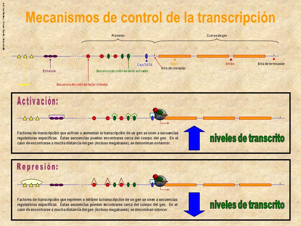 Jose Luis Martinez, Rosario Planelló, Gloria morcillo Mecanismos de control de la transcripción