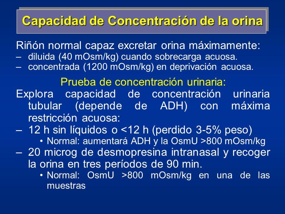 Capacidad de Concentración de la orina Riñón normal capaz excretar orina máximamente: –diluida (40 mOsm/kg) cuando sobrecarga acuosa. –concentrada (12