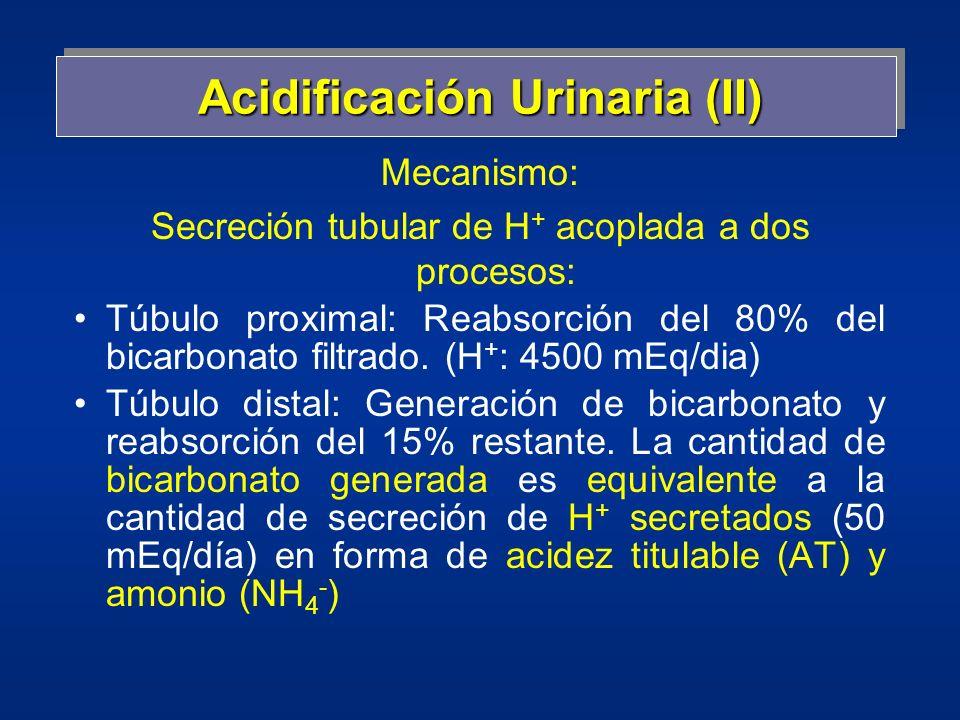 Acidificación Urinaria (II) Mecanismo: Secreción tubular de H + acoplada a dos procesos: Túbulo proximal: Reabsorción del 80% del bicarbonato filtrado