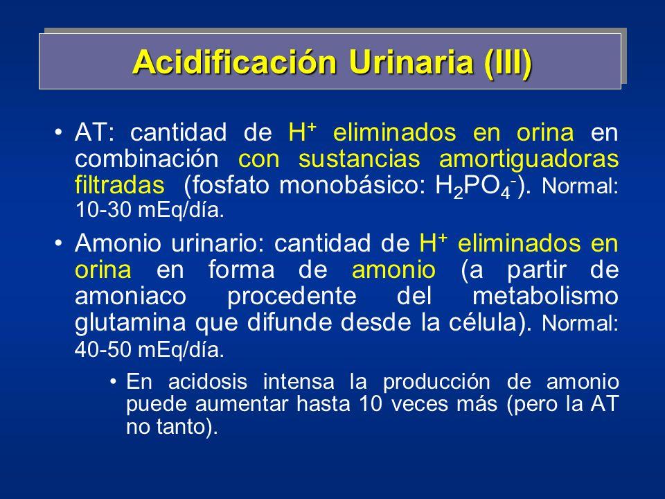 Acidificación Urinaria (III) AT: cantidad de H + eliminados en orina en combinación con sustancias amortiguadoras filtradas (fosfato monobásico: H 2 P
