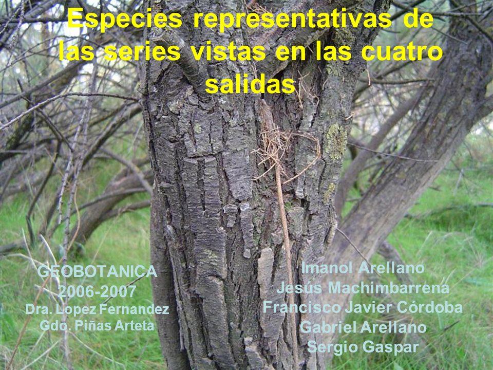 Especies representativas de las series vistas en las cuatro salidas GEOBOTANICA 2006-2007 Dra. Lopez Fernandez Gdo. Piñas Arteta Imanol Arellano Jesús