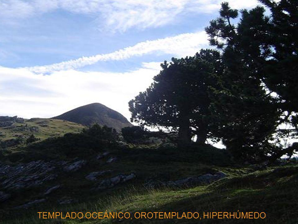 Polysticho setiferi-Fraxinetum excelsioris S. Crataegus monogyna Borde de bosque