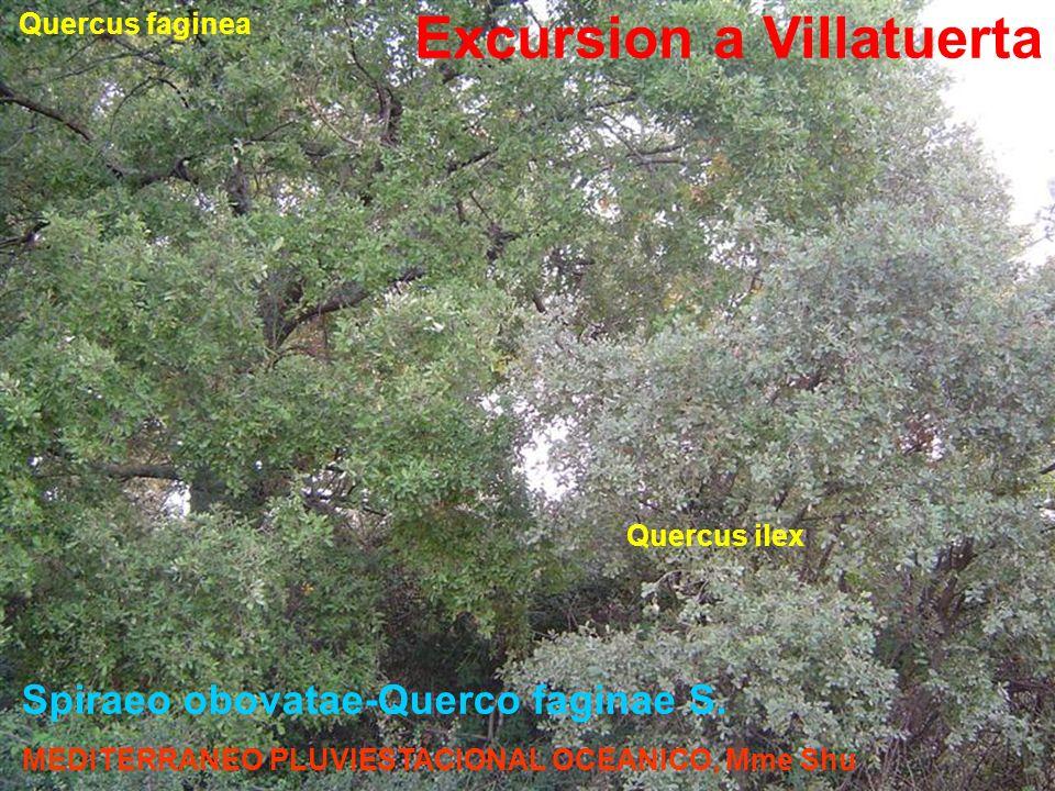 Spiraeo obovatae-Querco faginae S. Quercus ilex Quercus faginea Excursion a Villatuerta MEDITERRANEO PLUVIESTACIONAL OCEANICO, Mme Shu