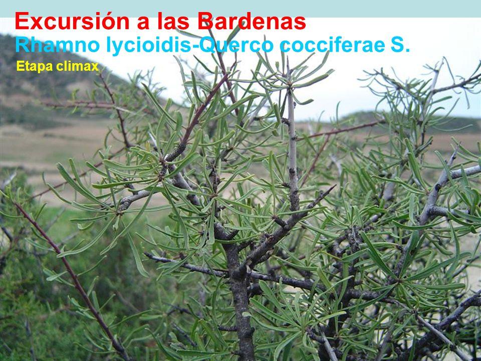 Rhamno lycioidis-Querco cocciferae S. Rhamnus lycioides Etapa climax Excursión a las Bardenas