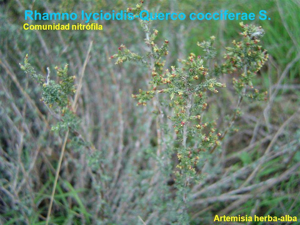 Rhamno lycioidis-Querco cocciferae S. Artemisia herba-alba Comunidad nitrófila