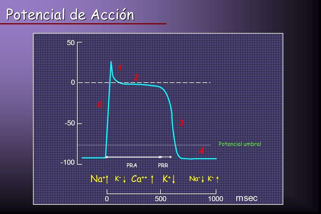 Potencial de Acción mV 05001000 msec 50 0 -50 -100 0 1 2 3 4 Na + K+K+ Ca ++ K+K+ K+K+ Potencial umbral PRA PRR
