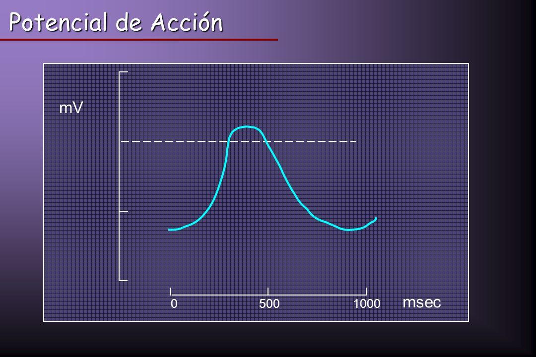 05001000 mV msec Potencial de Acción