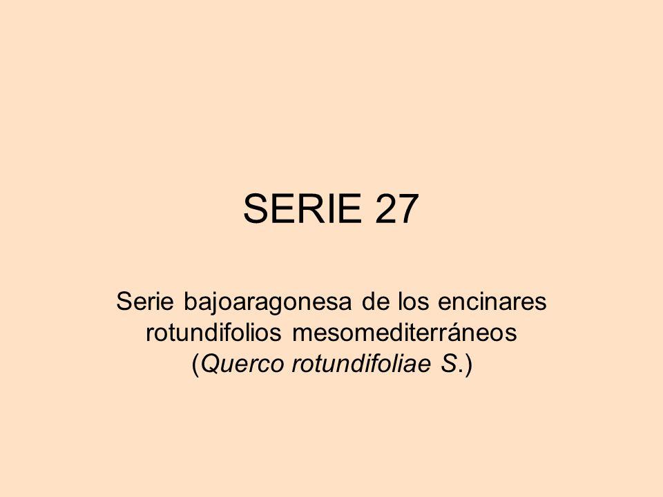 SERIE 27 Serie bajoaragonesa de los encinares rotundifolios mesomediterráneos (Querco rotundifoliae S.)