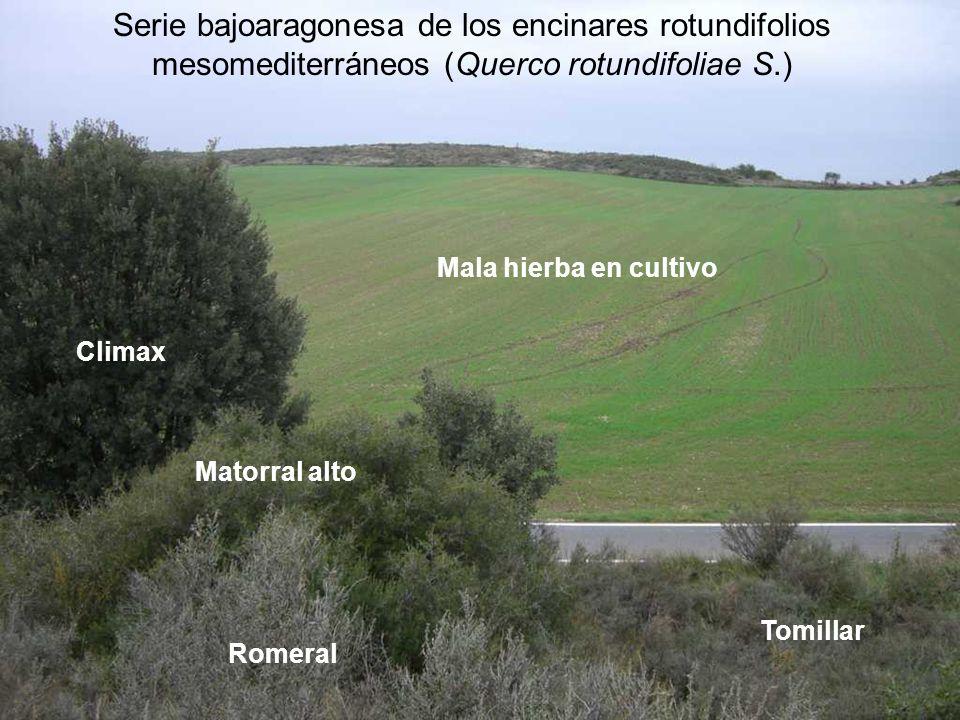 Climax Matorral alto Romeral Tomillar Mala hierba en cultivo