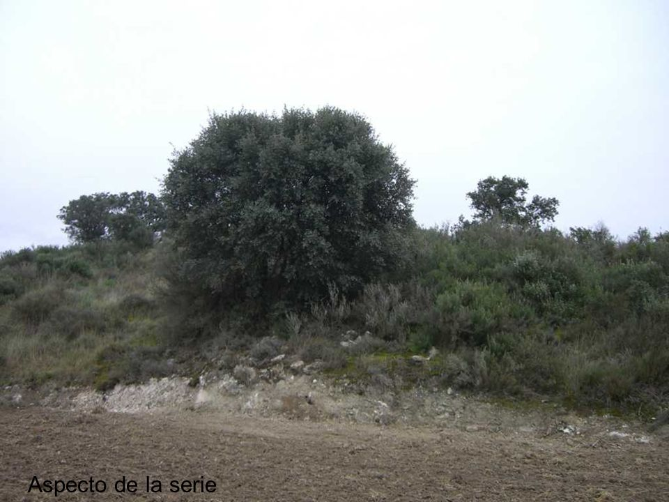Fragmento de Climax : Quercus rotundifolia