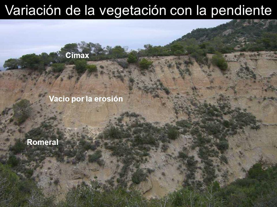 Variación de la vegetación con la pendiente Cimax Vacio por la erosión Romeral