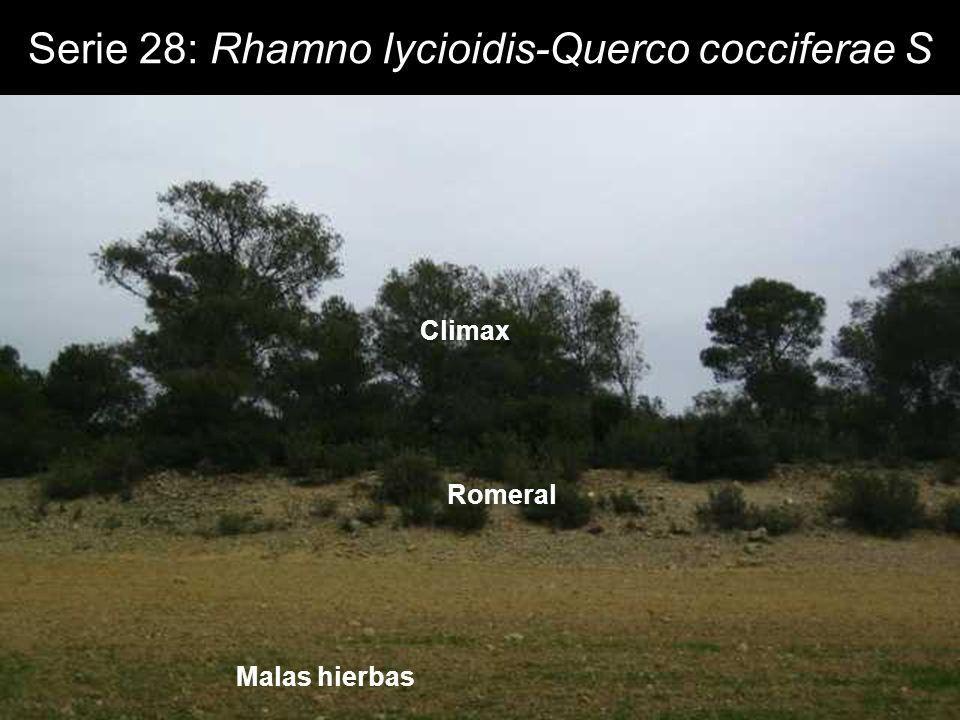 Climax Romeral Malas hierbas Serie 28: Rhamno lycioidis-Querco cocciferae S