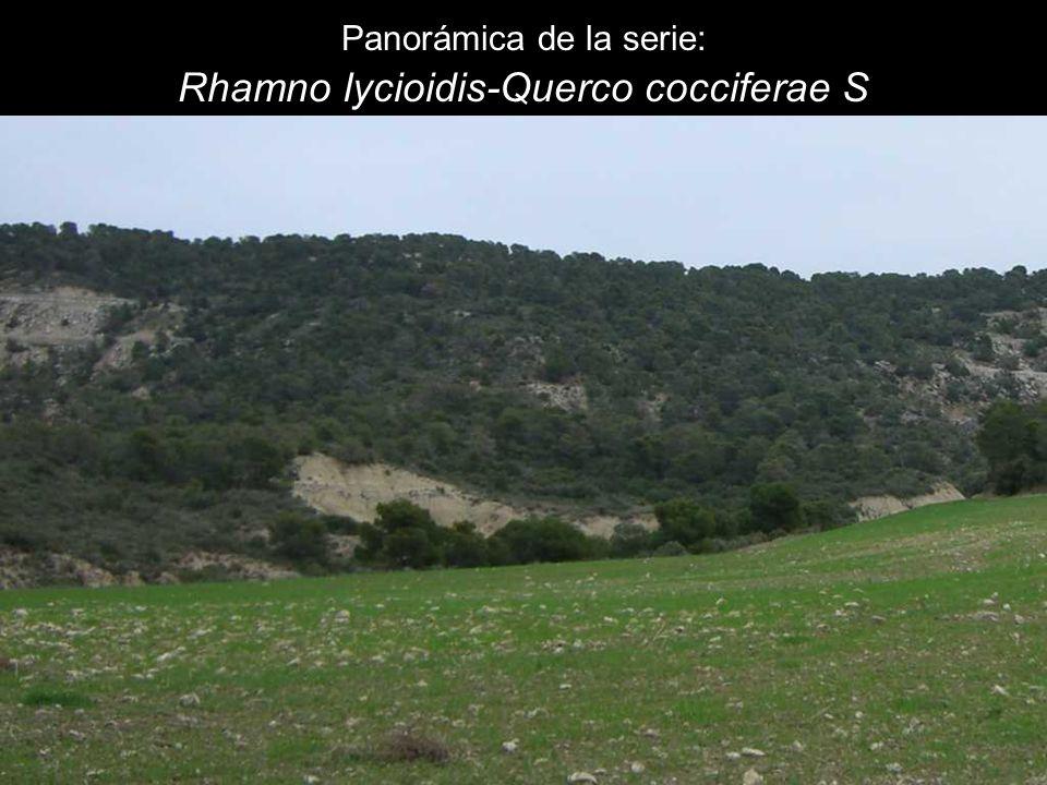Panorámica de la serie: Rhamno lycioidis-Querco cocciferae S