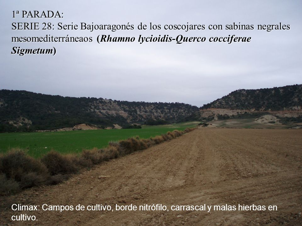 Climax: Campos de cultivo, borde nitrófilo, carrascal y malas hierbas en cultivo.
