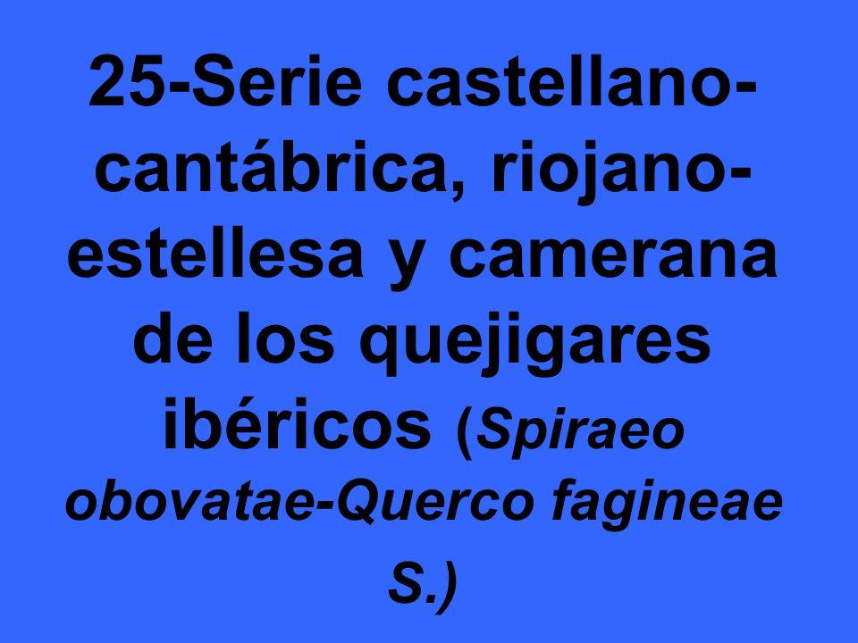 25-Serie castellano- cantábrica, riojano- estellesa y camerana de los quejigares ibéricos (Spiraeo obovatae-Querco fagineae S.)