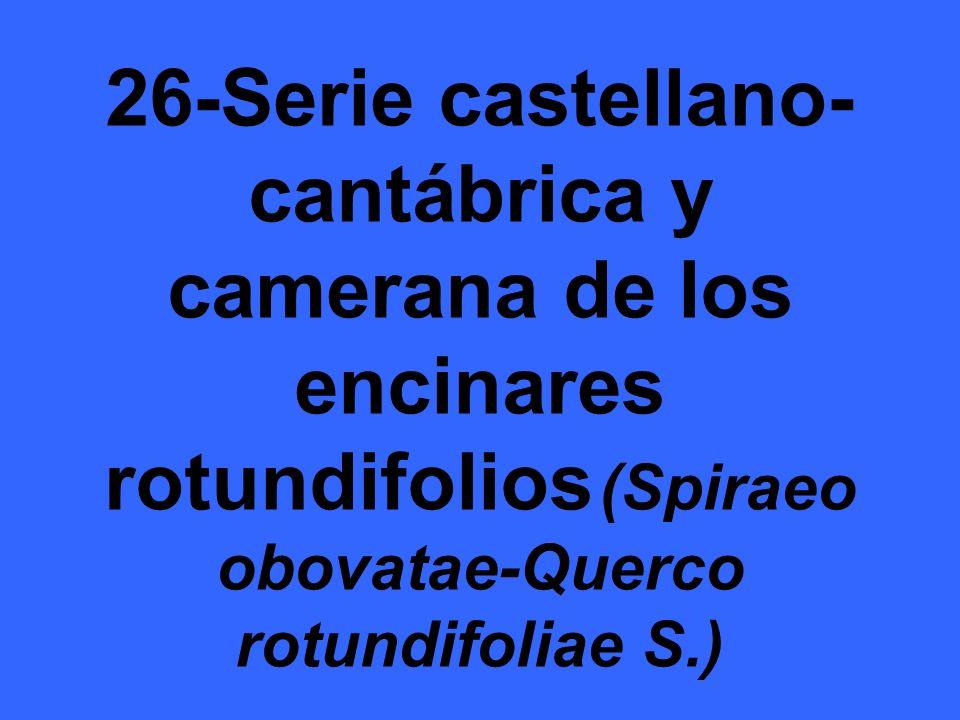 26-Serie castellano- cantábrica y camerana de los encinares rotundifolios (Spiraeo obovatae-Querco rotundifoliae S.)