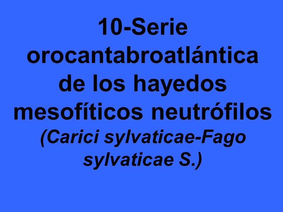 10-Serie orocantabroatlántica de los hayedos mesofíticos neutrófilos (Carici sylvaticae-Fago sylvaticae S.)