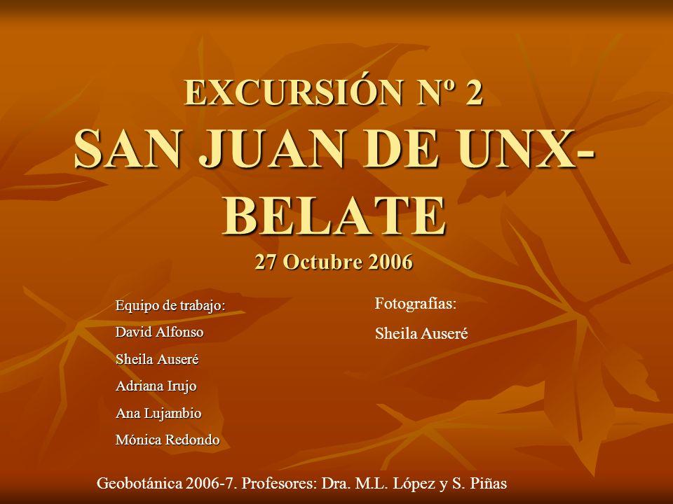 Ulex gallii (Tojal-brezal)