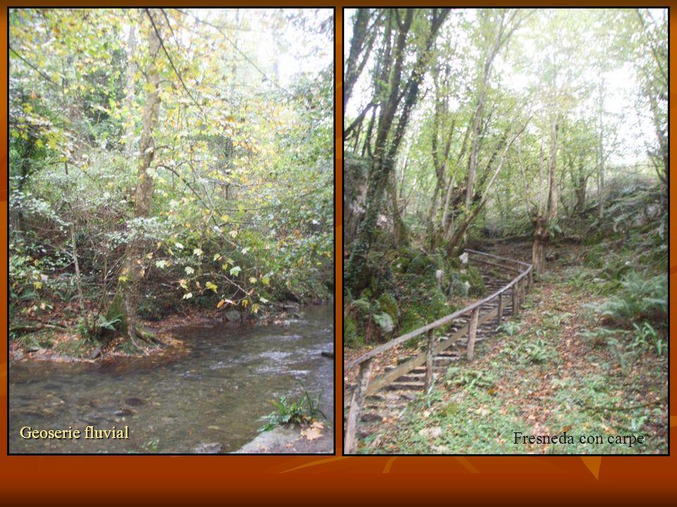 Geoserie fluvial Fresneda con carpe