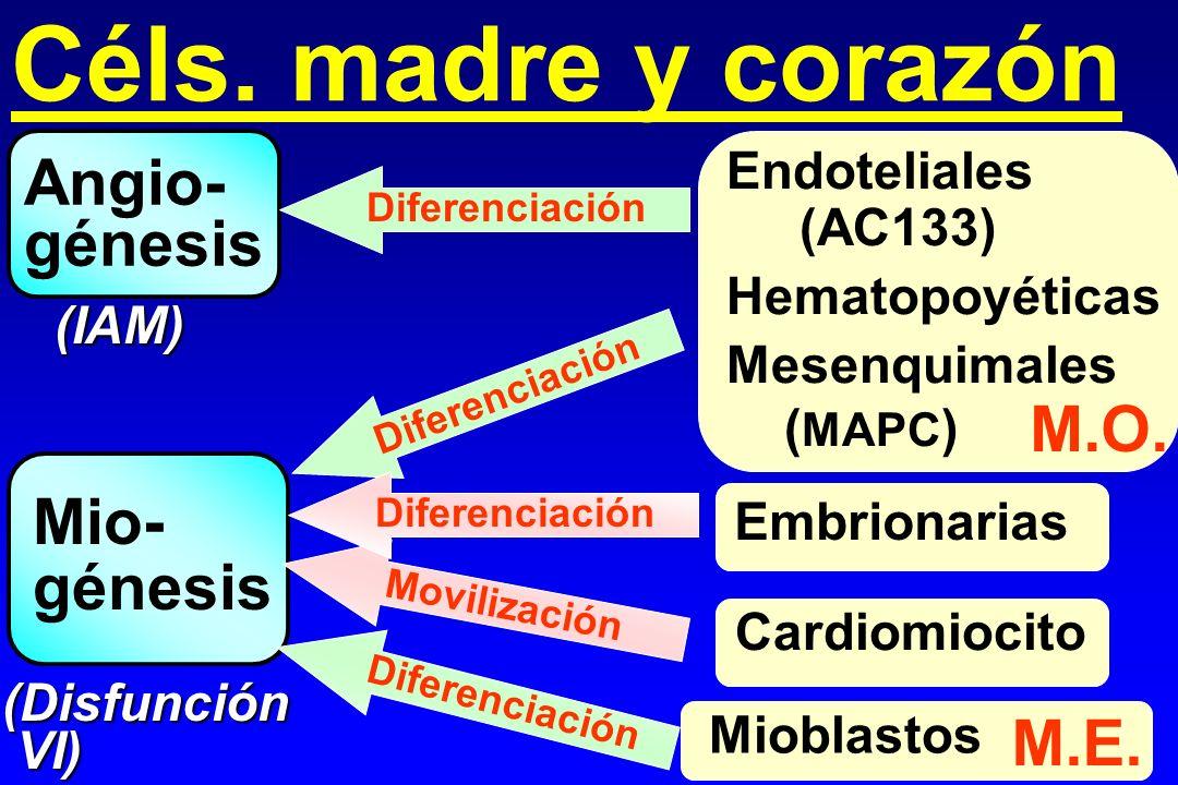 Céls. madre y corazón Embrionarias Angio- génesis Mio- génesis (IAM) Endoteliales (AC133) Hematopoyéticas Mesenquimales ( MAPC ) (Disfunción VI) VI) M