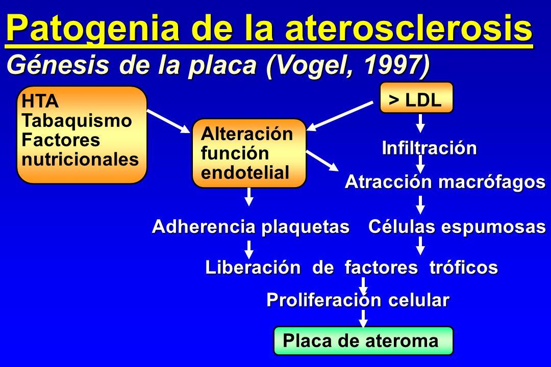 Patogenia de la aterosclerosis Génesis de la placa (Vogel, 1997) HTA Tabaquismo Factores nutricionales > LDL Alteración función endotelial Infiltració