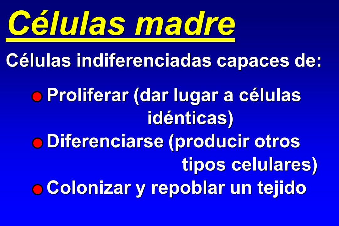 Células madre Células indiferenciadas capaces de: Proliferar (dar lugar a células idénticas) idénticas) Diferenciarse (producir otros tipos celulares)