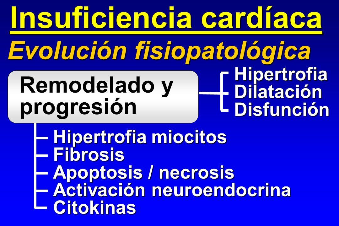 Insuficiencia cardíaca Evolución fisiopatológica Remodelado y progresión Hipertrofia miocitos Fibrosis Apoptosis / necrosis Activación neuroendocrina