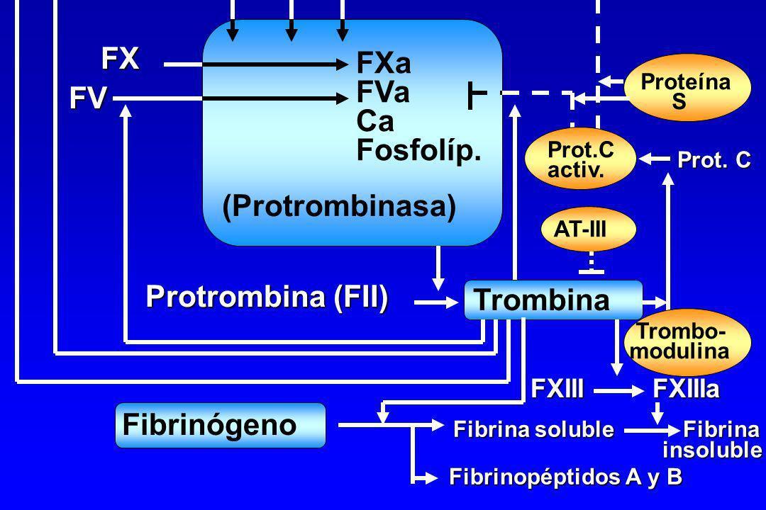 Coagulación Anticoagulación Sistema intrínseco Sistema extrínseco FT Fosfolípidos Calcio FVIIa FXI FXIa FVII TFPI Fosfolípidos Calcio FIXa FVIIIa FIX
