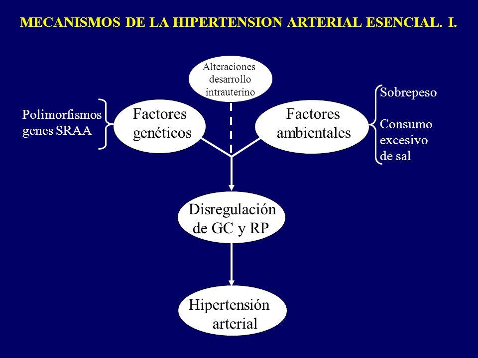 MECANISMOS DE LA HIPERTENSION ARTERIAL ESENCIAL. I. Factores Factores genéticos ambientales Disregulación de GC y RP Hipertensión arterial Polimorfism