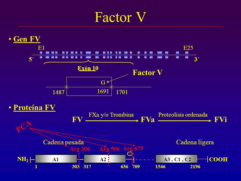 1487 1701 Exón 10 Factor V 5´3´ E1E25 1691 Gen FV G Factor V Proteína FV A3, C1, C2 21961546 COOH Cadena ligera A2A1 1303317656709 NH 2 Cadena pesada