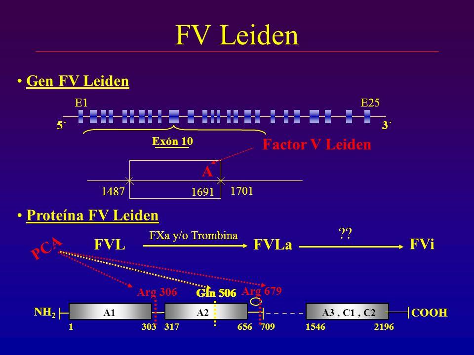 FV Leiden 1487 1701 Exón 10 5´3´ E1E25 1691 Gen FV Leiden A Factor V Leiden Proteína FV Leiden A3, C1, C2 21961546 COOH A2A1 1303317656709 NH 2 FVL FX