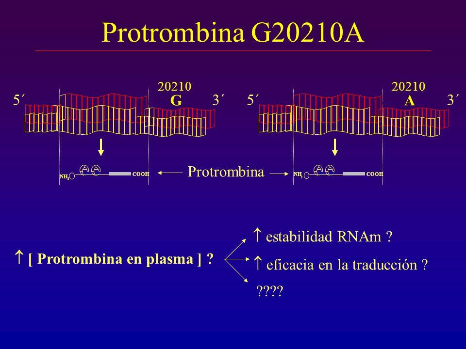 Protrombina G20210A 20210 G 5´3´ 20210 A 5´3´ NH 2 COOH Protrombina [ Protrombina en plasma ] ? NH 2 COOH eficacia en la traducción ? estabilidad RNAm