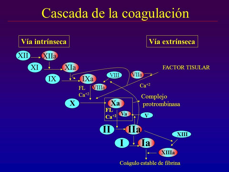 Cascada de la coagulación XII XIIa XI XIa X Xa II IIa I Ia FL Ca +2 FL Ca +2 VIIa FACTOR TISULAR Vía intrínsecaVía extrínseca Coágulo estable de fibri
