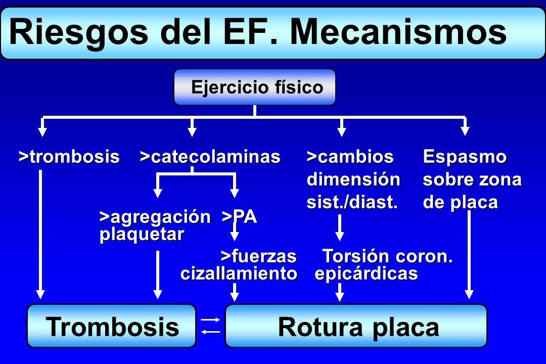 Ejercicio físico >trombosis>catecolaminas >cambiosEspasmo dimensiónsobre zona dimensiónsobre zona sist./diast.de placa sist./diast.de placa >agregació