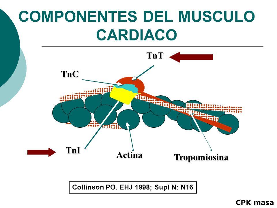 TnI Actina Tropomiosina TnT TnC Collinson PO. EHJ 1998; Supl N: N16 COMPONENTES DEL MUSCULO CARDIACO CPK masa