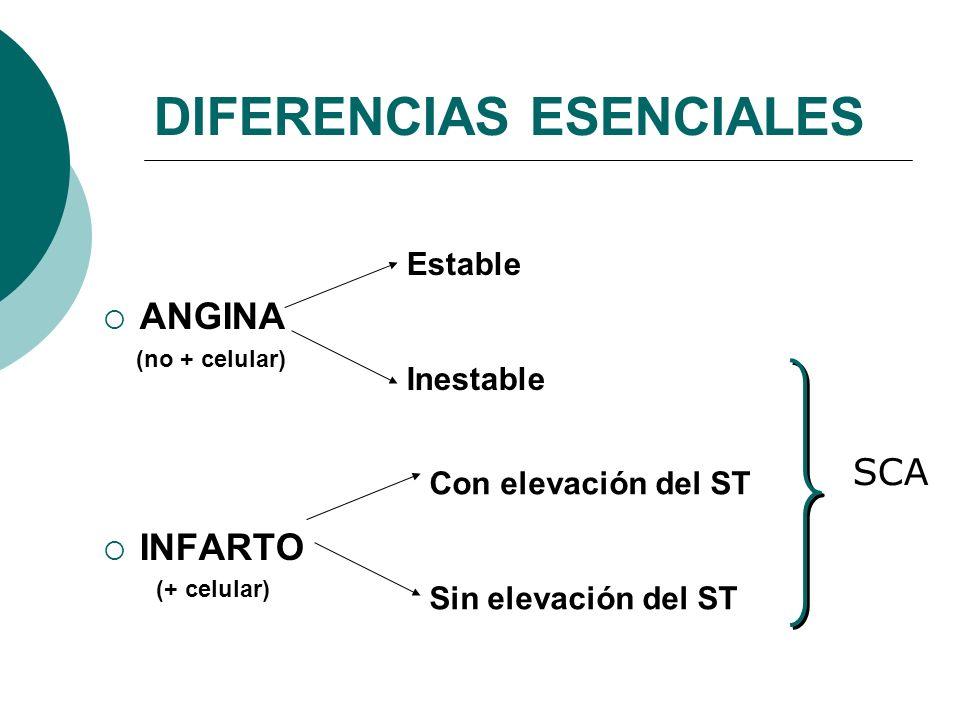 DIFERENCIAS ESENCIALES ANGINA (no + celular) INFARTO (+ celular) Estable Inestable Con elevación del ST Sin elevación del ST SCA