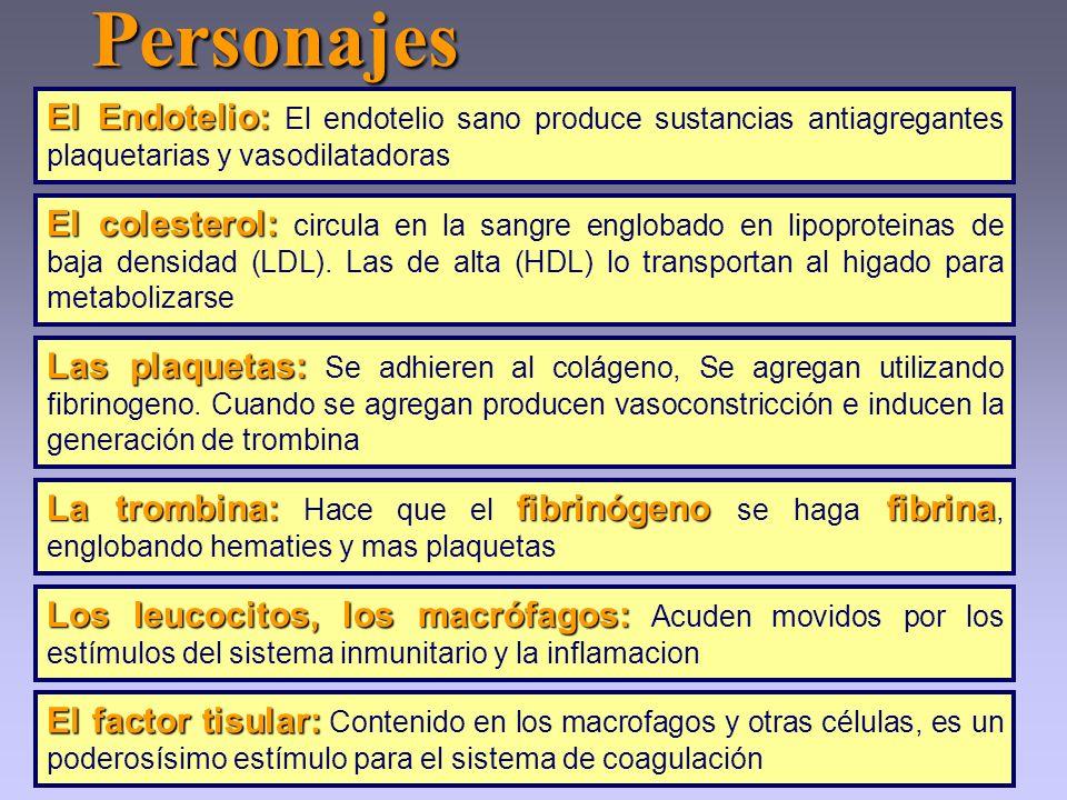 Personajes Los leucocitos, los macrófagos: Los leucocitos, los macrófagos: Acuden movidos por los estímulos del sistema inmunitario y la inflamacion E
