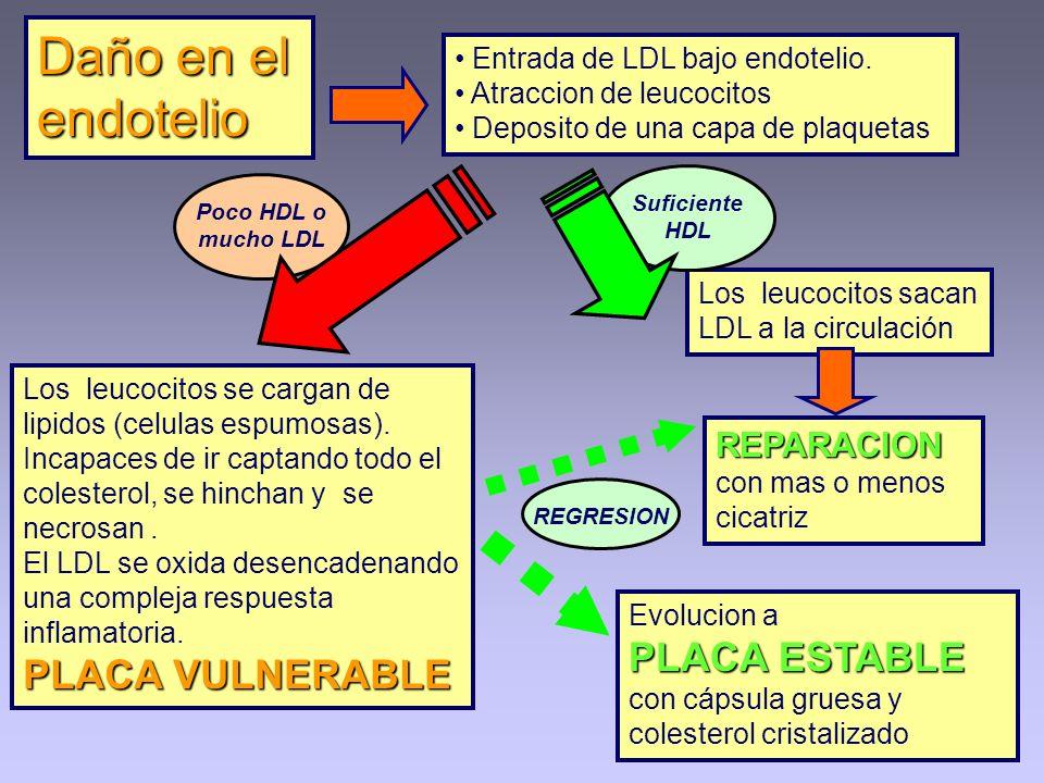 Daño en el endotelio Entrada de LDL bajo endotelio. Atraccion de leucocitos Deposito de una capa de plaquetas REPARACION con mas o menos cicatriz Los