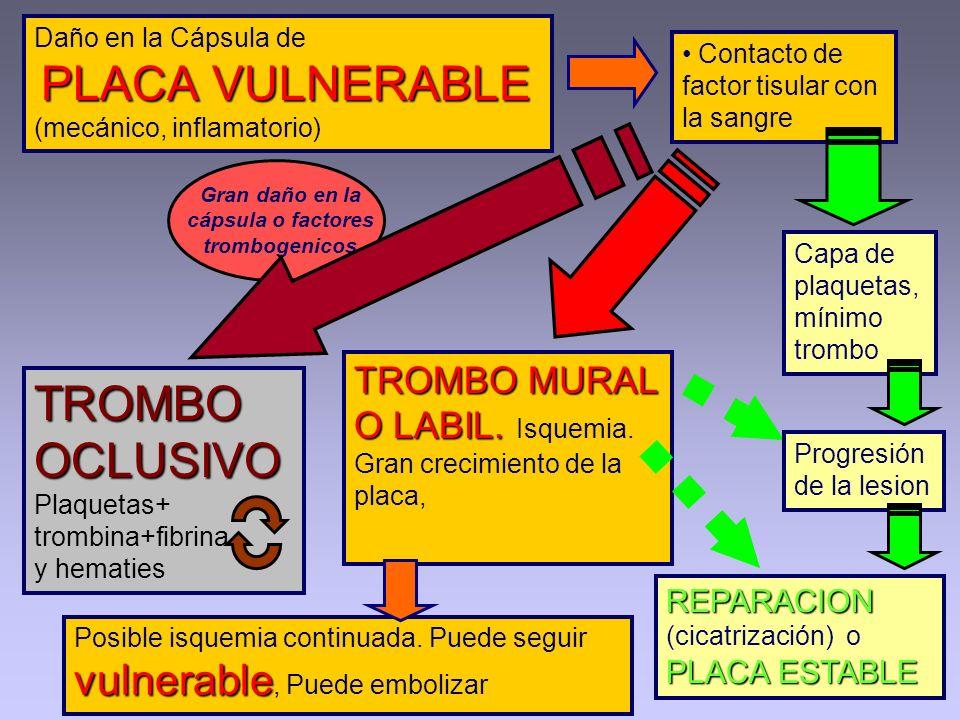 PLACA VULNERABLE Daño en la Cápsula de PLACA VULNERABLE (mecánico, inflamatorio) Contacto de factor tisular con la sangre REPARACION PLACA ESTABLE REP