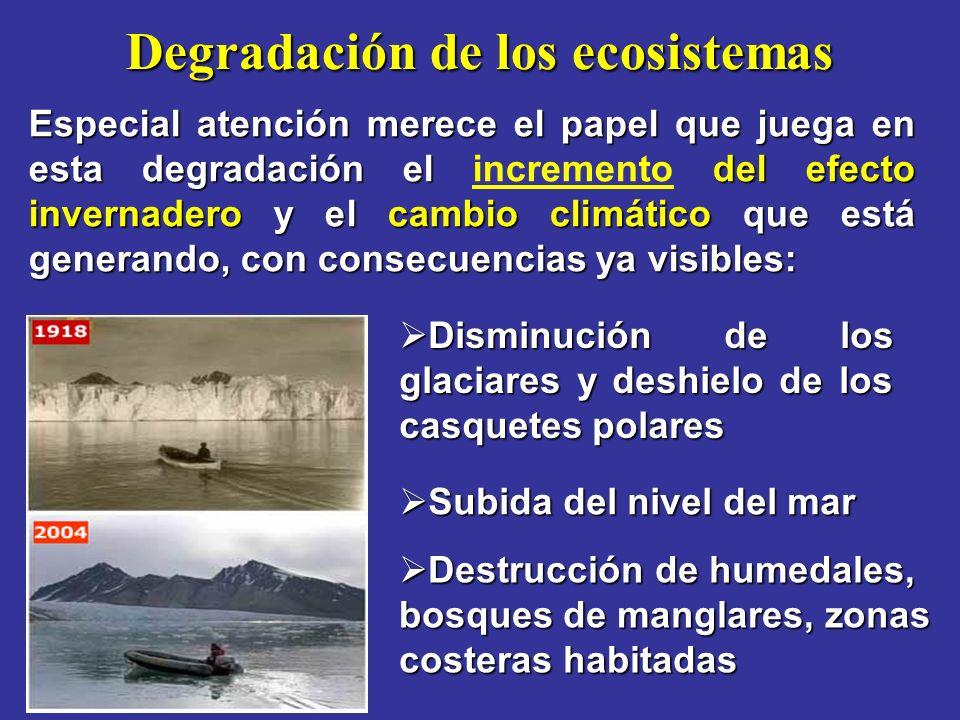 Degradación de los ecosistemas Especial atención merece el papel que juega en esta degradación el del efecto invernadero y el cambio climático que está generando, con consecuencias ya visibles: Especial atención merece el papel que juega en esta degradación el incremento del efecto invernadero y el cambio climático que está generando, con consecuencias ya visibles: Disminución de los glaciares y deshielo de los casquetes polares Disminución de los glaciares y deshielo de los casquetes polares Subida del nivel del mar Subida del nivel del mar Destrucción de humedales, bosques de manglares, zonas costeras habitadas Destrucción de humedales, bosques de manglares, zonas costeras habitadas