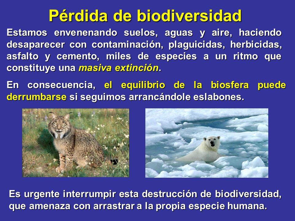 Pérdida de biodiversidad Estamos envenenando suelos, aguas y aire, haciendo desaparecer con contaminación, plaguicidas, herbicidas, asfalto y cemento, miles de especies a un ritmo que constituye una masiva extinción.