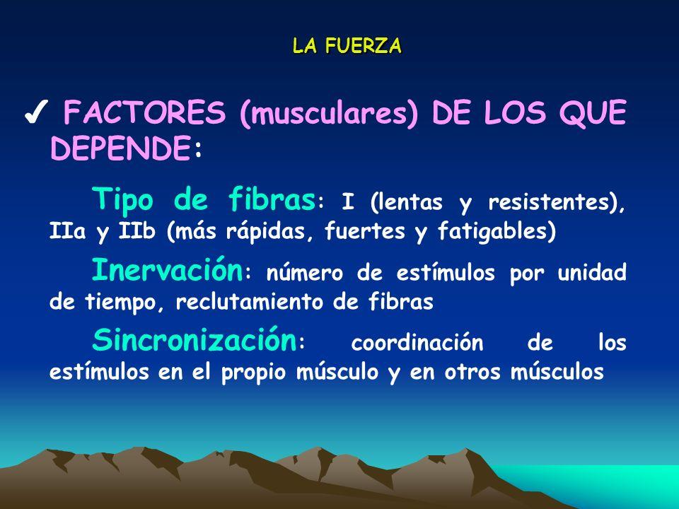 LA FUERZA FACTORES (musculares) DE LOS QUE DEPENDE: Tipo de fibras : I (lentas y resistentes), IIa y IIb (más rápidas, fuertes y fatigables) Inervació