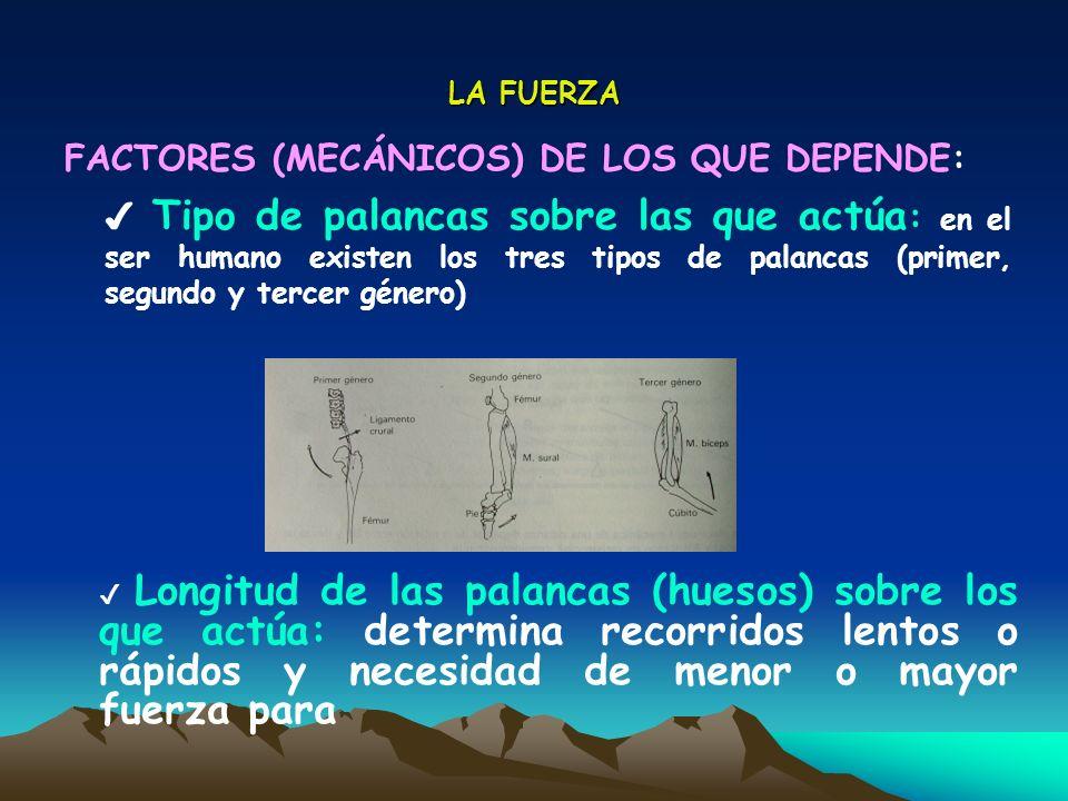 LA FUERZA FACTORES (MECÁNICOS) DE LOS QUE DEPENDE: Tipo de palancas sobre las que actúa : en el ser humano existen los tres tipos de palancas (primer,
